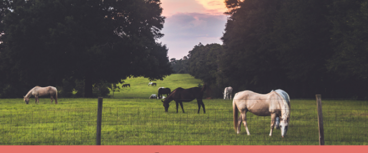 How Much Property Do You Need to Own a Horse?