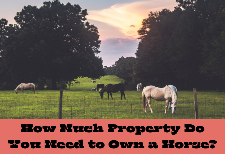 How Much Property Do You Need to Own a Horse