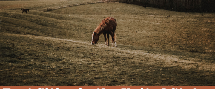 Best Cities in the United States to Own a Horse Property