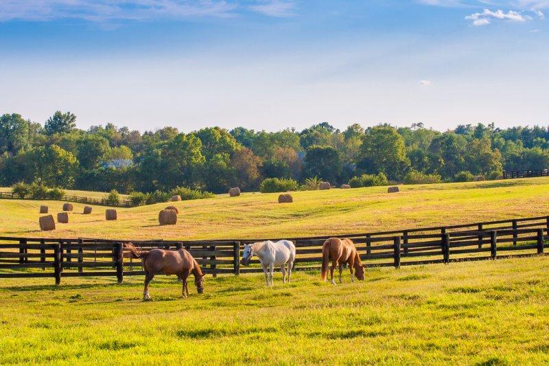 Horse Property Greenville SC