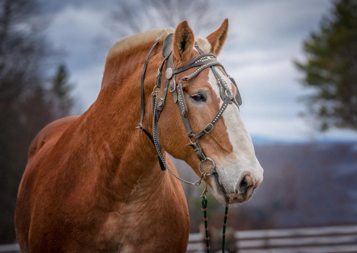 Horse Property Woodstock VT